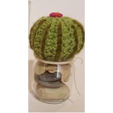 Cactus vari